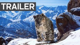 Planet Earth II: Official Extended Trailer – BBC Earth