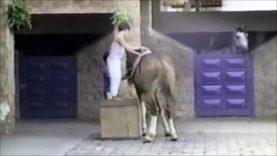 Un chien fait fuir des enfant et s'en va à dos de cheval… WTF