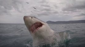Unbelievable Shark Attacks